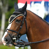 Referenzen beris: Scott Brash